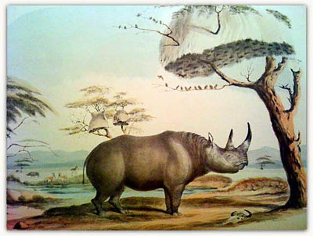Zimbabwe-Rhino-Air-Lift-Wildmoz.com