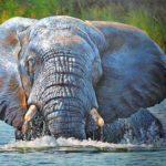 African Wildlife Art Exhibition