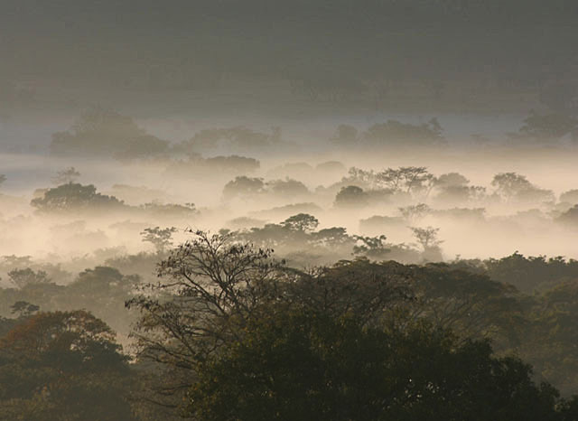 Africa-Savannah-Mist-Wildmoz.com