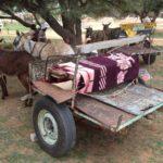 Donkey Cart Africa's Basic Taxi