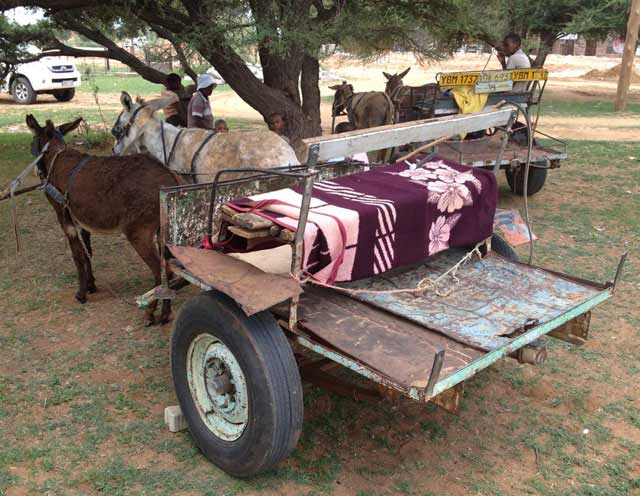 Donkey-Cart-Comfort-and-Style-Wildmoz.com