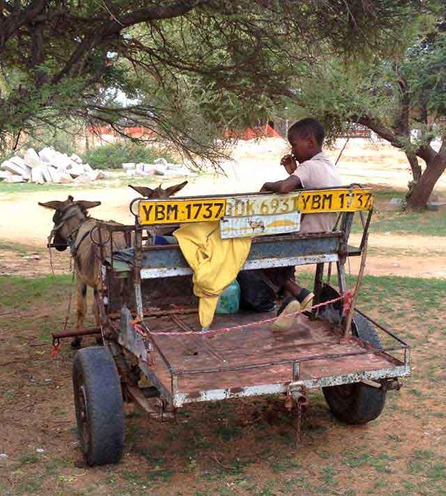 Donkey-Cart-With-Driver-Wildmoz.com