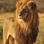 Large Animals – Kruger Park