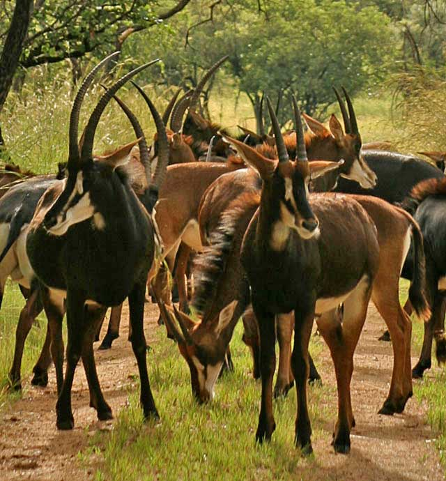 Wildmoz.com-Incredible-Animals-of-the-Kruger-Park