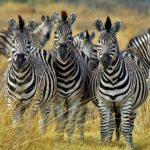 Amazing Animals – Kruger Park