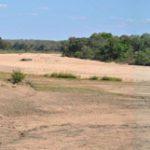 Kruger Park Drought