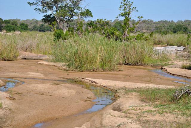 Kruger-Day-Trip-Kruger-River-Bed-Wildmoz.com