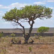 Kruger Park Day Trip