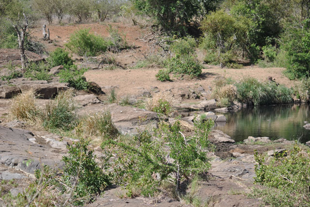 Kruger-day-trip-natures-waterhole-Wildmoz.com