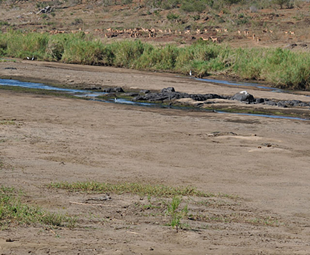 Kruger-Tragedy-no-water-no-food-Wildmoz.com