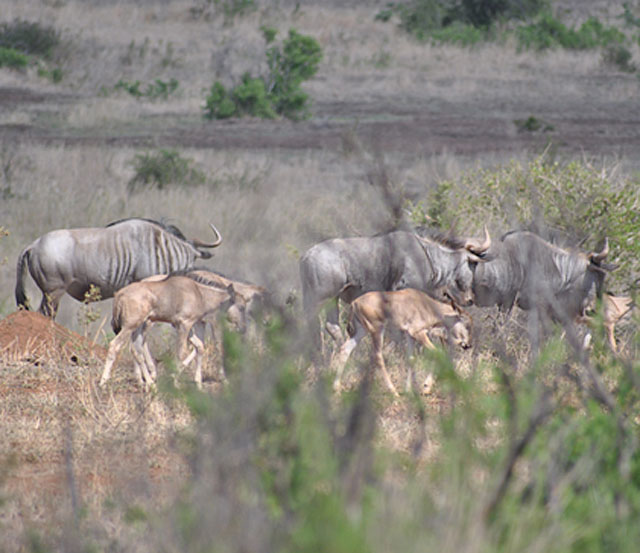 Kruger-Tragidy-summer-of-no-rain-Wildmoz.com