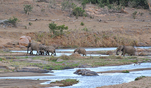 Go-Rain-Elephant-River-Crossing-Wildmoz.com