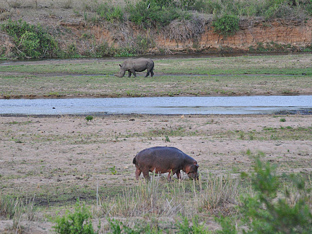 Go-Rain-Rhino-and-Hippo-River-Grazing-Wildmoz.com