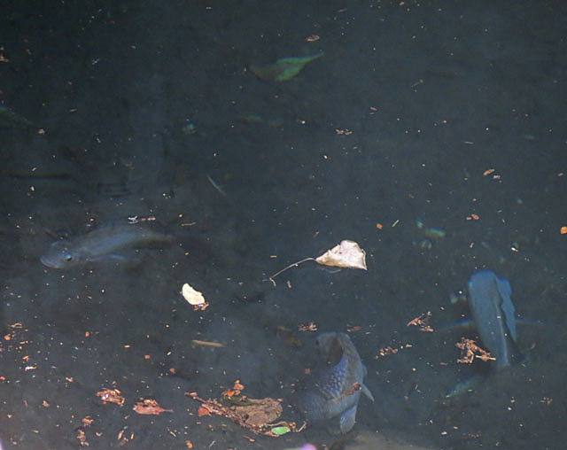 Sleeping-Pools-Fish-Wildmoz.com