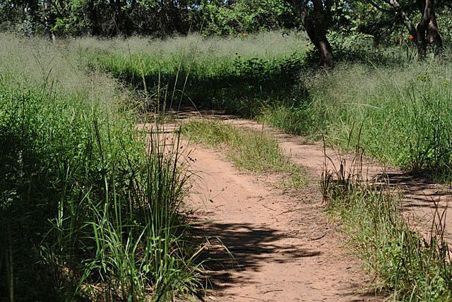 Wild-Explorations-Bush-Trail-Wildmoz.com