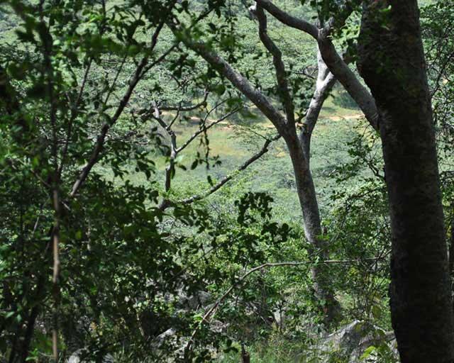 Wild-Explorations-Highland-Mountain-Forest-Wildmoz.com