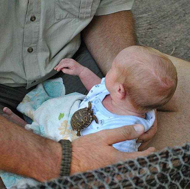 Baby-Leopard-Tortoise-With-Baby-Wildmoz.com