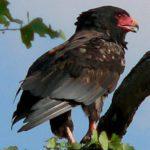 Bushveld Birds Zimbabwe Style