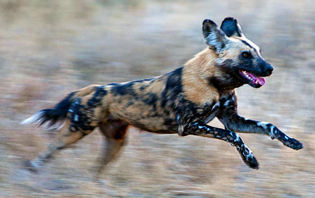 Pictures Of Three Legged Dogs