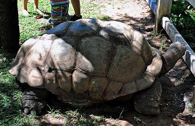 Tommy-Tortoise-Side-Lion-Cheetah-Park-Wildmoz.com