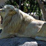 Harare Lion and Cheetah Park