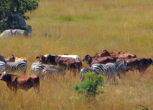 Animal-eco-grazing-Wildmoz.com
