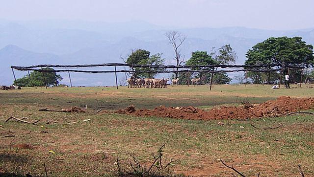 Zebra-passive-boma-capture-Wildmoz.com