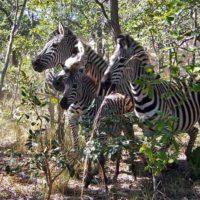 Passive Wildlife Capture