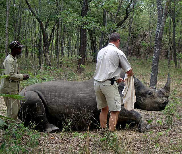 Rhino-blindfold-Wildmoz.com