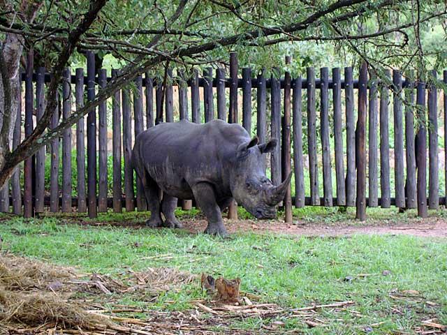 Rhino-boma-Wildmoz.com