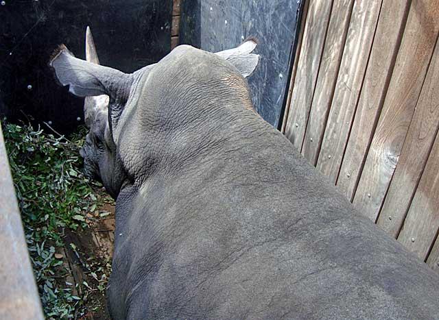 Rhino-booked-passage-Wildmoz.com