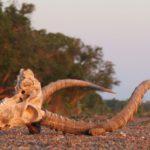 Kruger Starvation