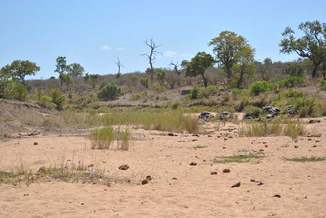 Kruger-Dry-River-Bed-Wildmoz.com