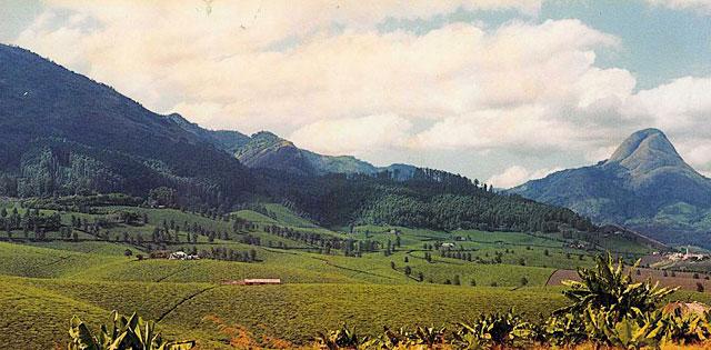 mozambique-tea-plantation-wildmoz.com