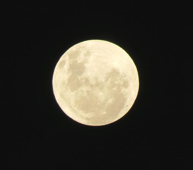 african-moon-wildmoz.com