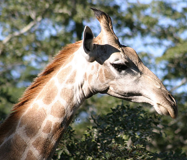 fast-giraffe-wildmoz.com