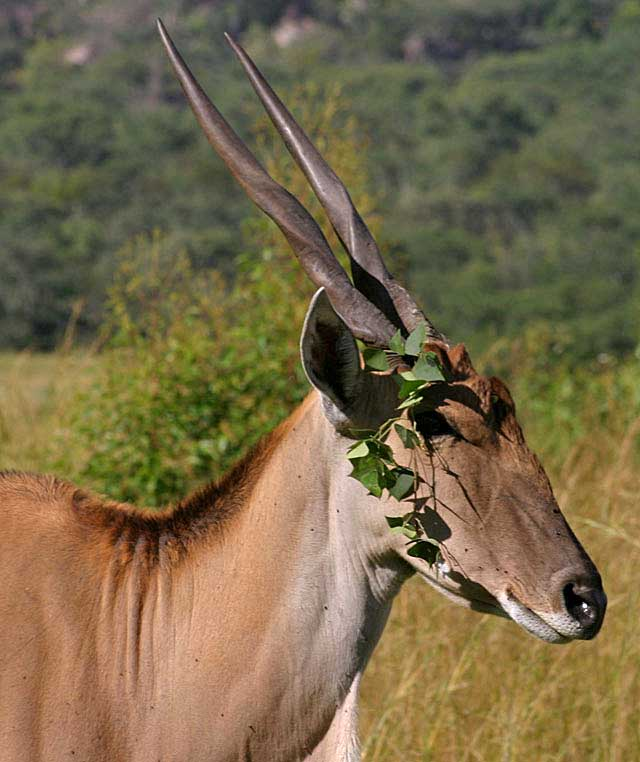 garlanded-eland-wildmoz.com