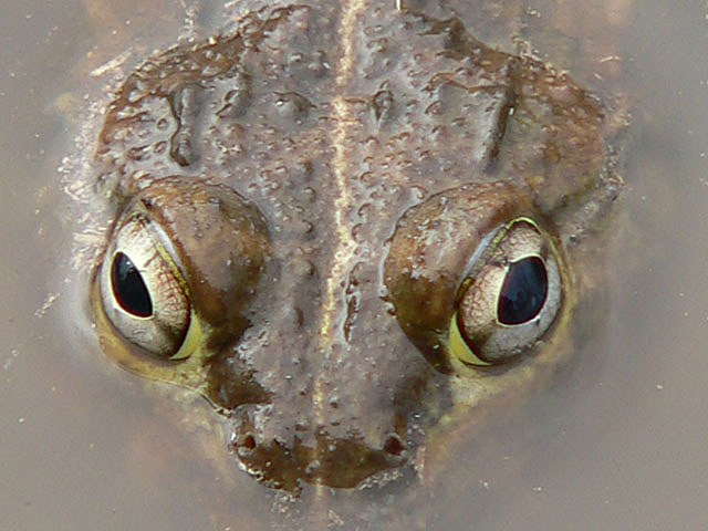 little-frog-wildmoz.com