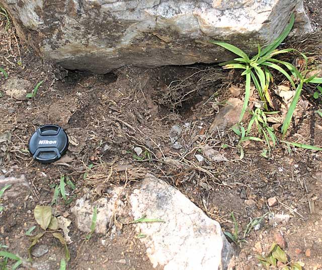 bat-ear-fox-diggings-wildmoz.com