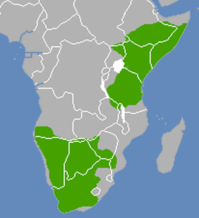 Bat-eared-fox-distribution-map-wildmoz.com