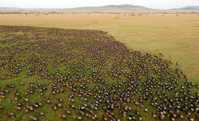 serengeti-migration-africa-wildmoz.com