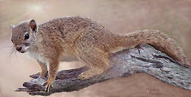 African-tree-squirrel-art-wildmoz.com
