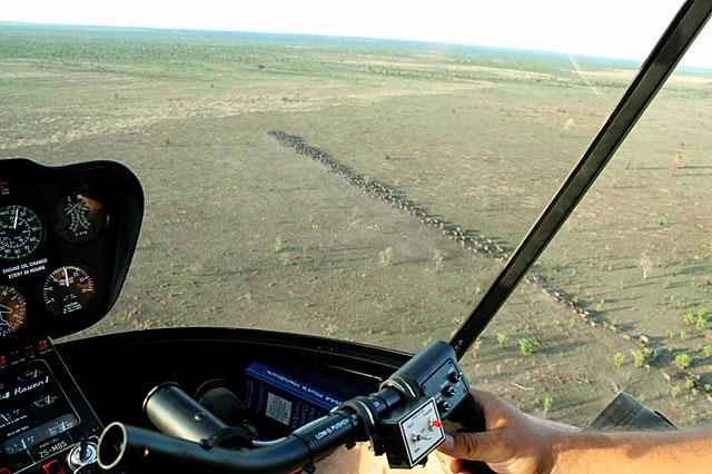 Helicopter-buffalo-wrangler-wildmoz.com