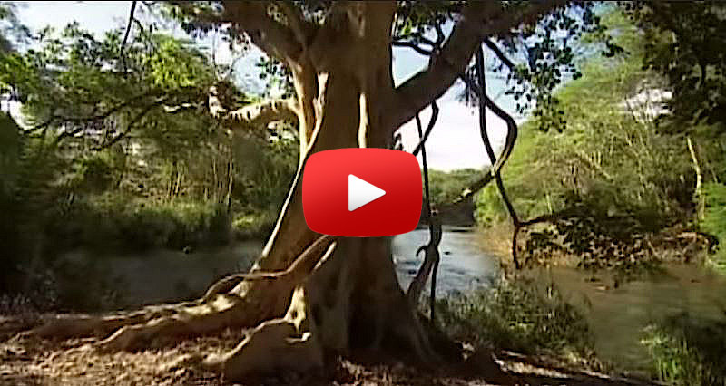 African-queen-video-CariMostert.com