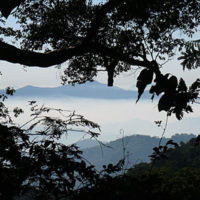 Mount Mabu Lost Forest