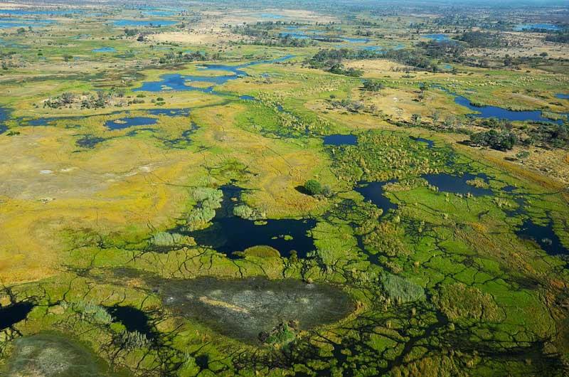 Okavango-panorama-wildmoz.com