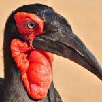 Cooperative Birds Of Africa