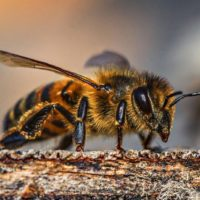Bee Navigation And Algorithms