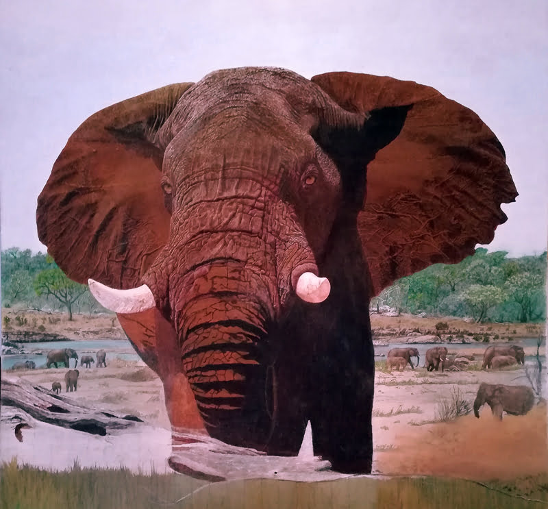 Elephant-called-Dignaty-Wildmoz.com