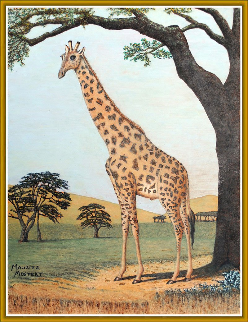 How-Giraffe-Streched-His-Neck-Wildmoz.com